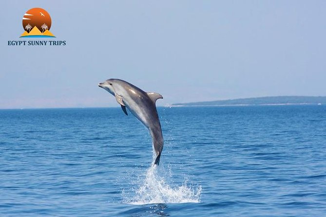 Dolphin House, amazing trip with snorkeling and dolphin watching photo 4