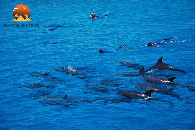 Dolphin House, amazing trip with snorkeling and dolphin watching photo 3