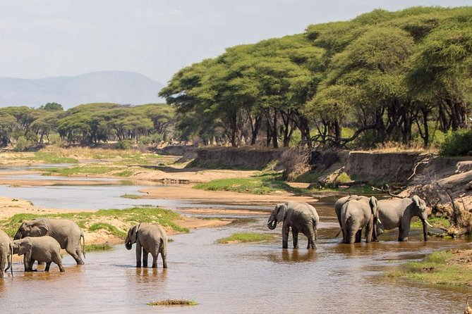 5-Day Ruaha Tanzania Wildlife Safari photo 1