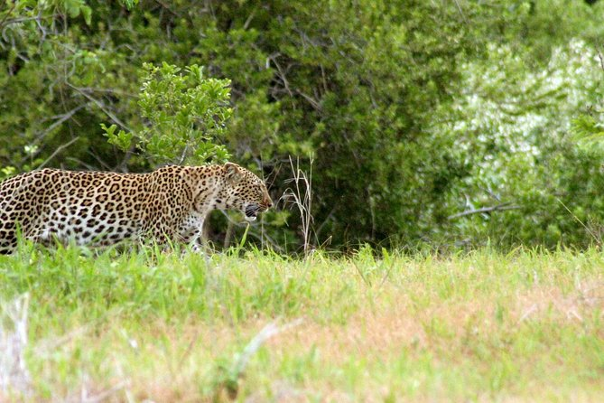 5-Day Ruaha Tanzania Wildlife Safari photo 3