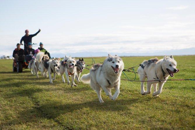 Husky Kart Ride in Iceland, nearby Reykjavik