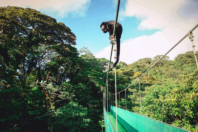 Monteverde Sky Tram & Hanging Bridges Cloud Forest Tour from San Jose