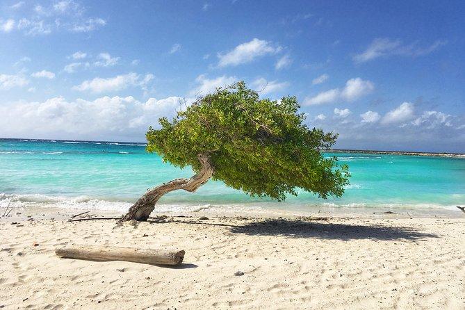 Insolite decouverte d'Aruba en VF