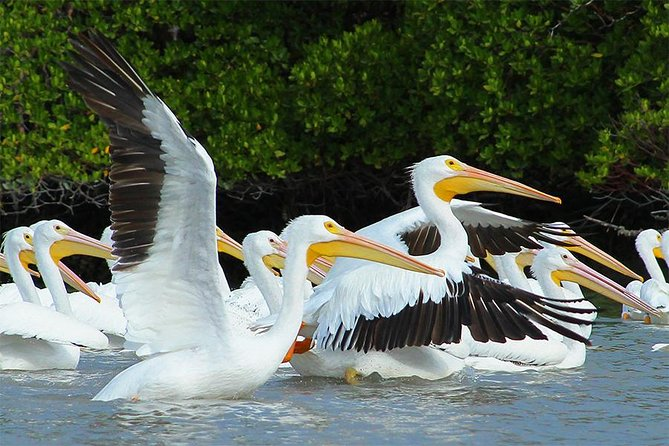 Birding Photography Boat Tour - See the Amazing Birds of Rookery Bay! photo 8