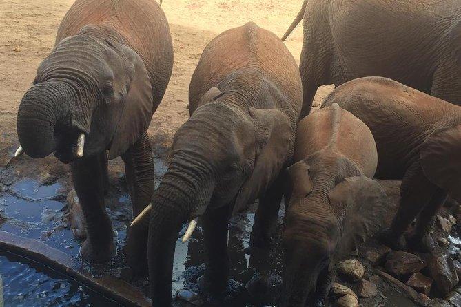 Tarangire and Ngorongoro 2 days Budget camping Safari