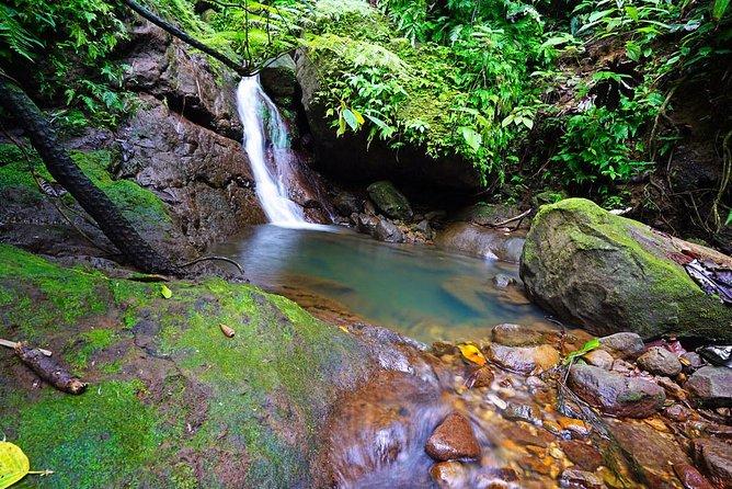 Half Day Rainforest Tour