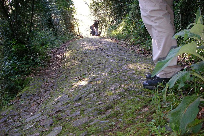 Pedestrian route in the Bussaco National Forest