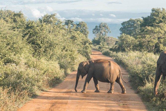 Udawalawa National Park - Day Tour From Negombo