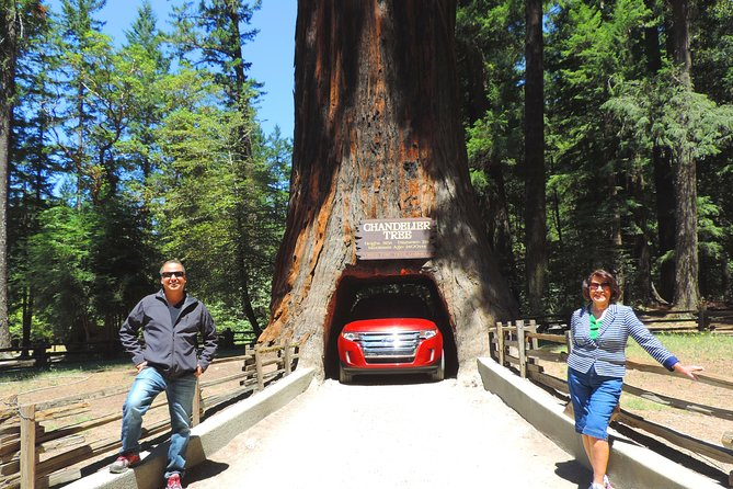 Avenue of the giants redwoods private day tour from San Francisco