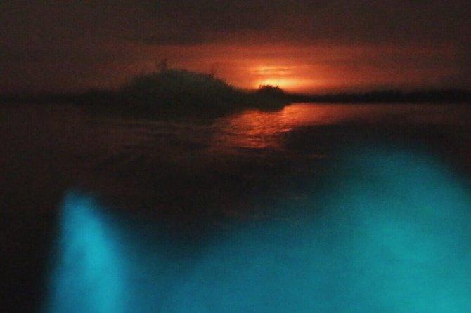 Bioluminiscente Tour At Night
