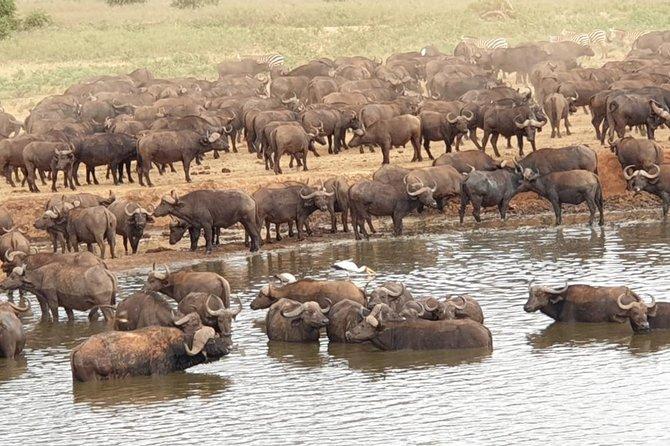3 Days 2 Nights Tsavo East and Amboseli