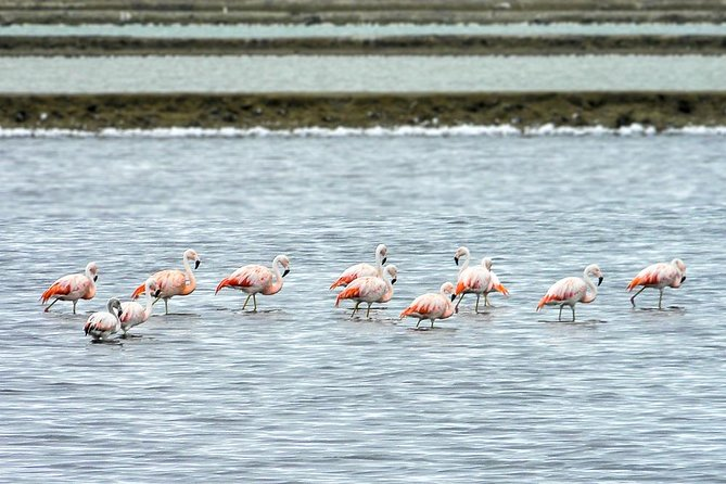 Salinas tour and bird Route Full Day From Guayaquil