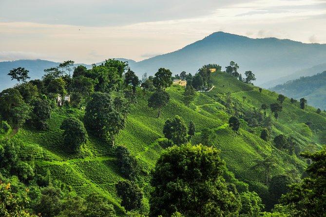 7 days Short Hike & Getaway to Ilam Tea Garden