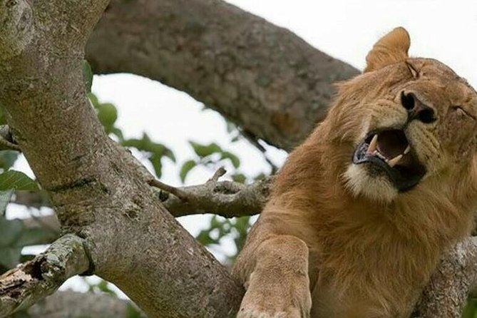 19 Days Wildlife Experience Safari, Uganda
