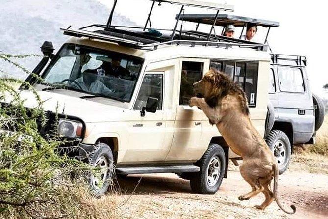 4 Days Tanzania Safari Tour