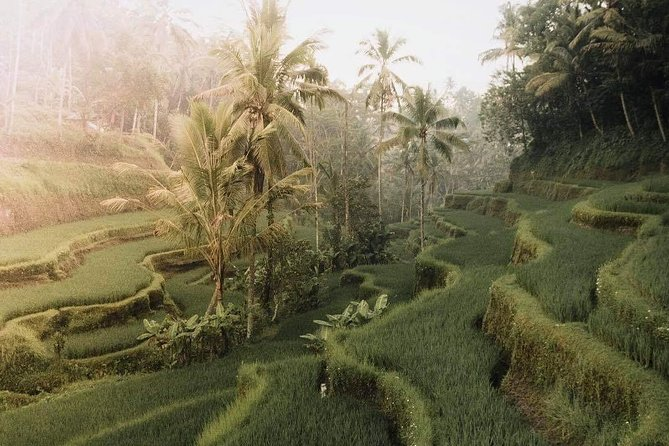 Private ubud village day tour & waterfalls surrounding photo 3
