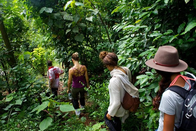 Rain Forest Trekking at Kitulgala Forest Reserve Sri Lanka photo 6