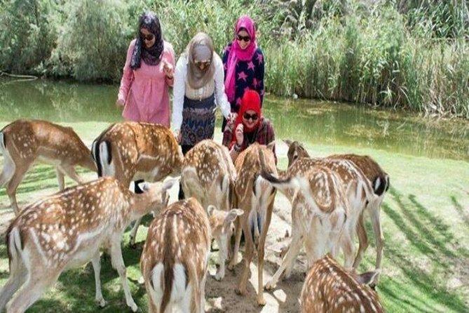 Africano Park Alexandria Safari From Cairo