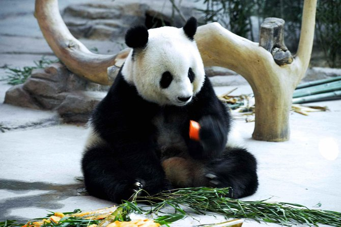 3-Day Yabuli Ski Resort and Panda House Private Trip from Harbin with Accommodation photo 4