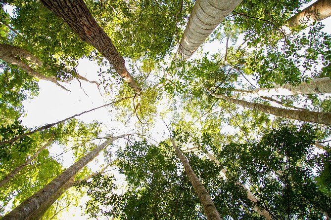 Fraser Island 4WD Tour from Noosa photo 7
