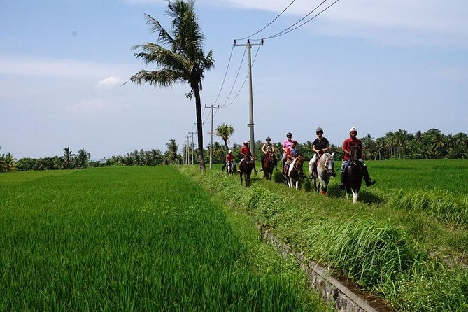 Bali Horse Riding Experience: Long Ride rice field, beach and village