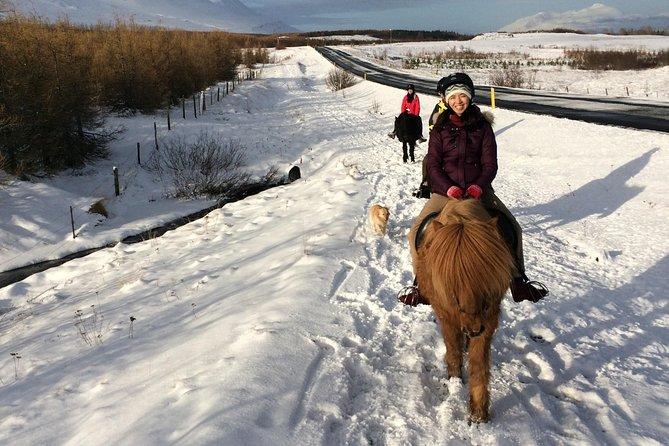 Horse Riding Tour in Akureyri
