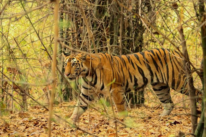 Kanha Tiger Reserve expedition from Jabalpur Airport