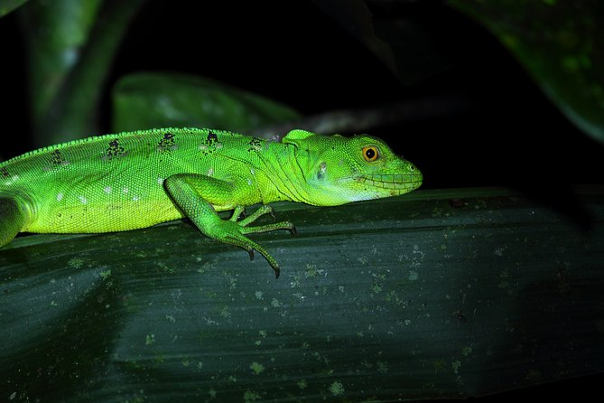 Rainforest Night Walk and Authentic Costa Rican Dinner from La Fortuna