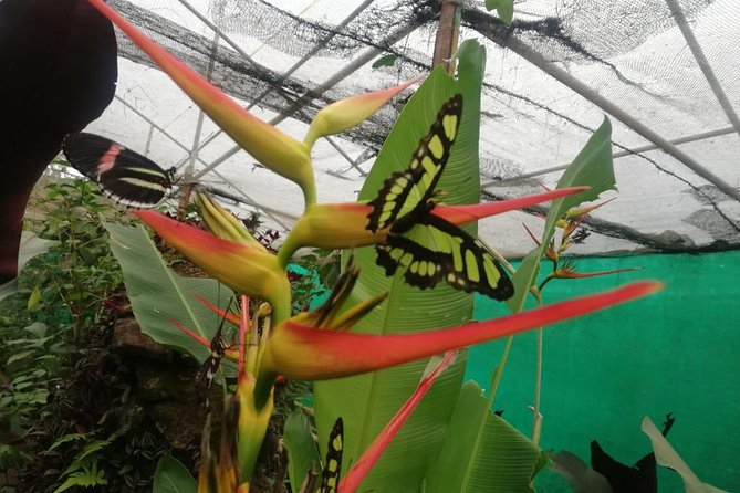 Mindo Cloud Forest - Private tour from Quito - Nature, Waterfalls and Chocolate