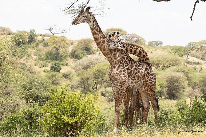 Day 1 Arusha – Lake Manyara National Park