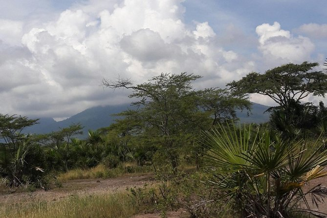 Tracking Baluran National Park via Surabaya