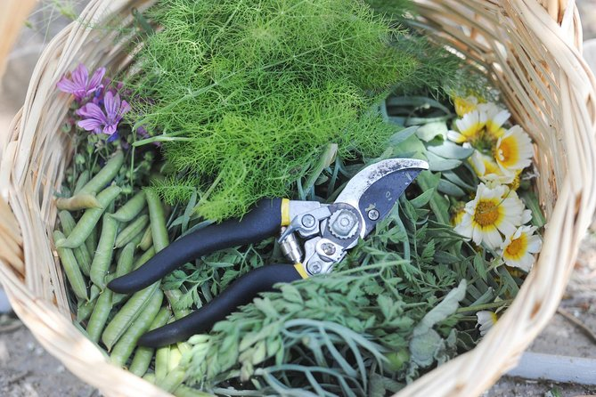 Private Greek Cooking Class and Foraging Experience in Syros
