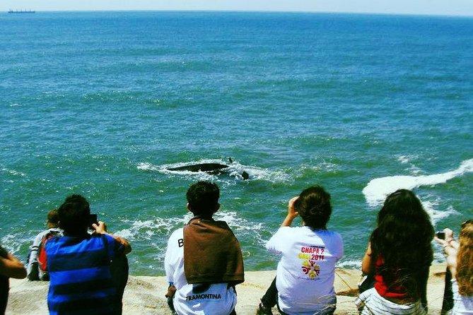 Trilha da Baleia Franca