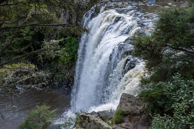 Rainbow Falls, Kerikeri River Walk & Kawiti Glow Worm Caves Tour