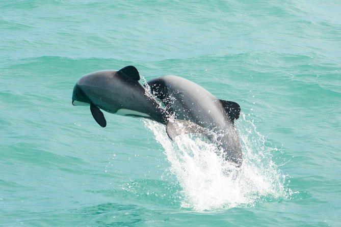 Akaroa Shuttle & Dolphin Experience