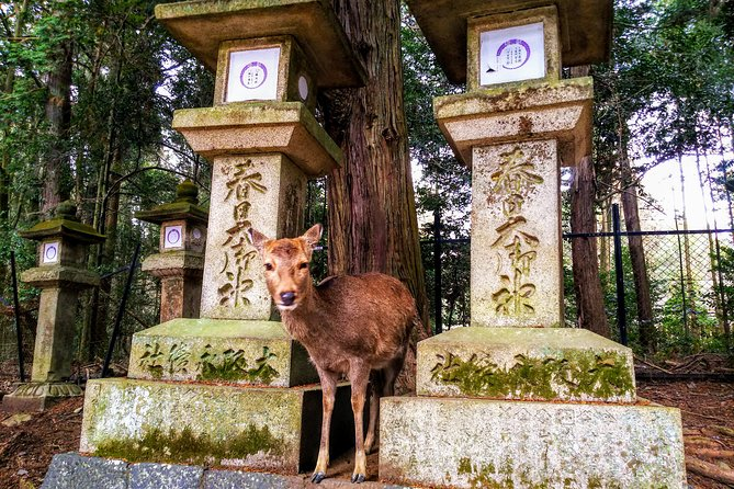 Deer City Nara Walking & Izakaya Hopping Tour photo 1