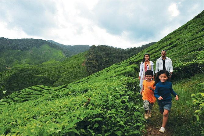 Cameron Highlands Full Day Tour (pick up from Kuala Lumpur)