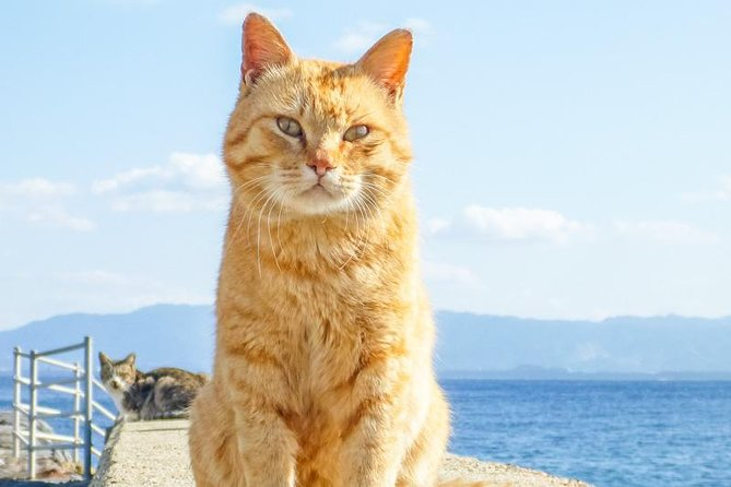 Private Tour - An Island Heaven of Cats. More Cats than Humans in Ainoshima