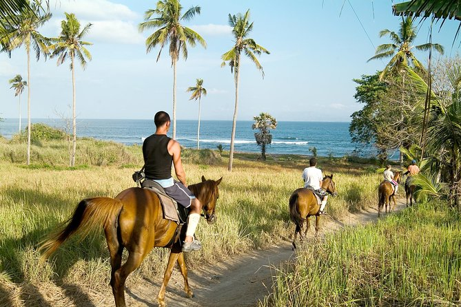 Horse Riding at Saba Bay