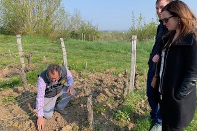 English speaking vineyards tours in the Loire Valley (Chinon, Saumur, Bourgueil)