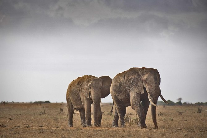 2-Day Mombasa to Tsavo East Safari
