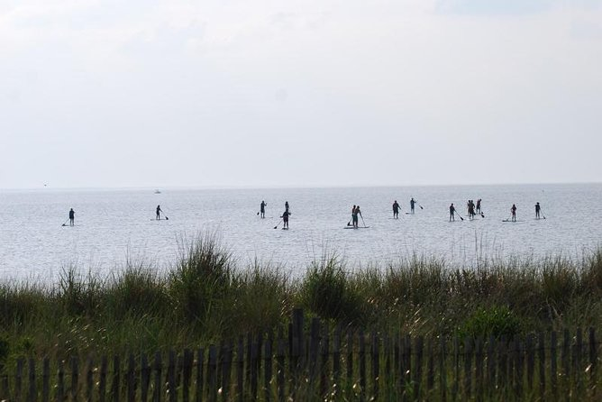 Evening Dolphin Paddle Board Excursion on Delaware Bay photo 6