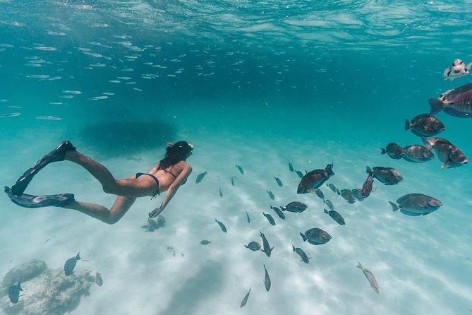 Aruba Sailing & Snorkeling Experience