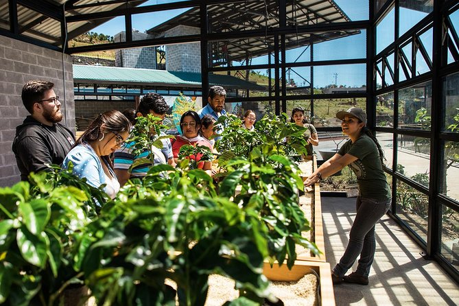 Full day at Poas Volcano with coffee tour at Starbucks Farm from San José