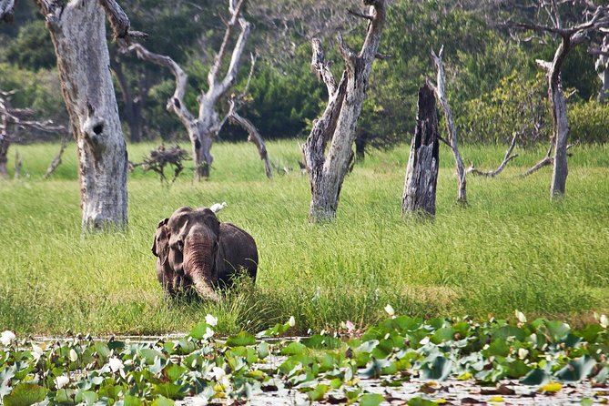 Private Day Tour to Yala National Park by Jeep