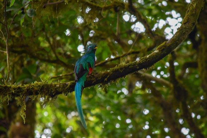 Birdwatching at Curi Cancha Reserve