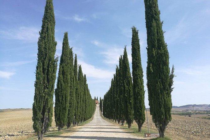 Montepulciano Wine & Pienza Flavors Day Tour from Rome