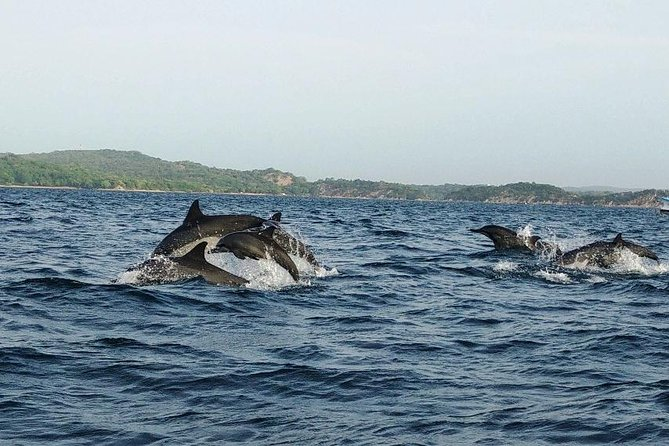 Whale & Dolphin Watching Trincomalee