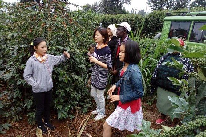 Kiambu Coffee Farm: Day Tour From Nairobi
