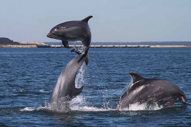 Lisbon Dolphins - dolphin watching in Lisbon